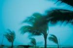 HurricanePalms_dv118085